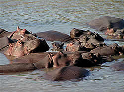 South African Tours with Zafari Tours - Day Trips -  Zululand St Lucia -Hluhluwe-Umfolosie National Park